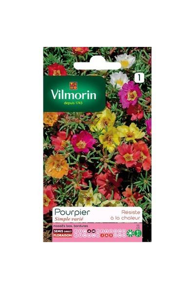 Vilmorin Yalınkat İpek Çiçeği Çiçek Tohumu