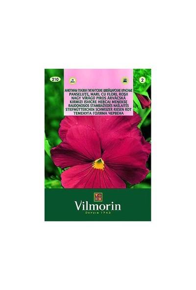 Vilmorin Hercai Menekşe (Bordo Alacalı) Çiçek Tohumu