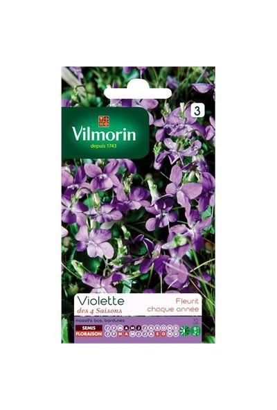 Vilmorin Kır Menekşesi Çiçek Tohumu