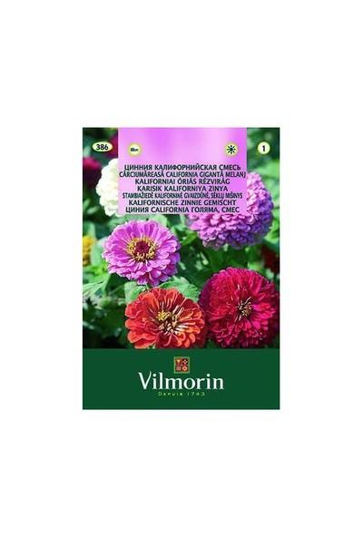 Vilmorin Kirli Hanım Çiçeği Çiçek Tohumu