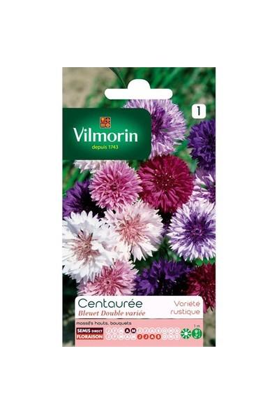 Vilmorin Peygamber Çiçeği - Gökbaş - Kantaron Çiçek Tohumu