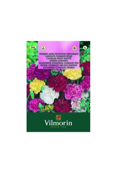 Vilmorin Kırmızı İri Çiçekli Karanfil Çiçek Tohumu
