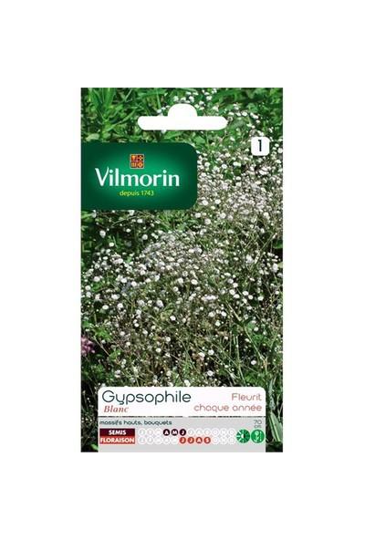 Vilmorin Beyaz Bahar Yıldızı Çiçek Tohumu