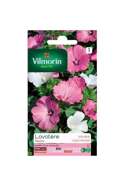 Vilmorin Pamuk Çiçeği Çiçek Tohumu