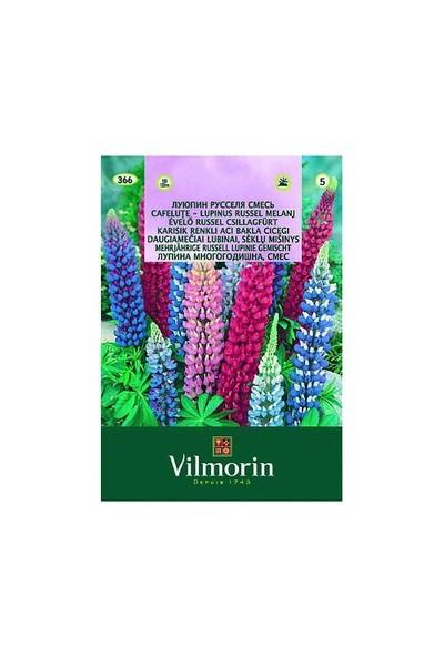 Vilmorin Acıbakla - Lüpen Çiçek Tohumu