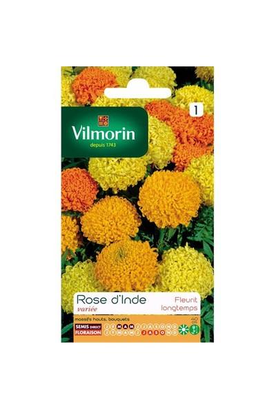 Vilmorin İri Kafa Kadife Çiçeği Çiçek Tohumu