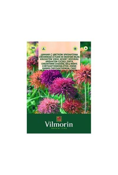 Vilmorin Kirlihanım Çiçeği - Krizantem Çiçekli Çiçek Tohumu