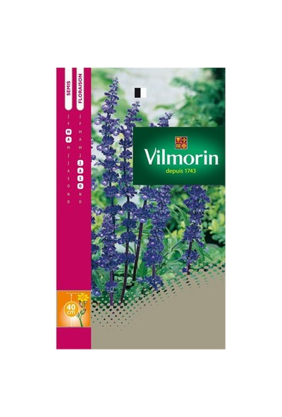 Vilmorin Transilvanya Adaçayı Çiçeği Çiçek Tohumu