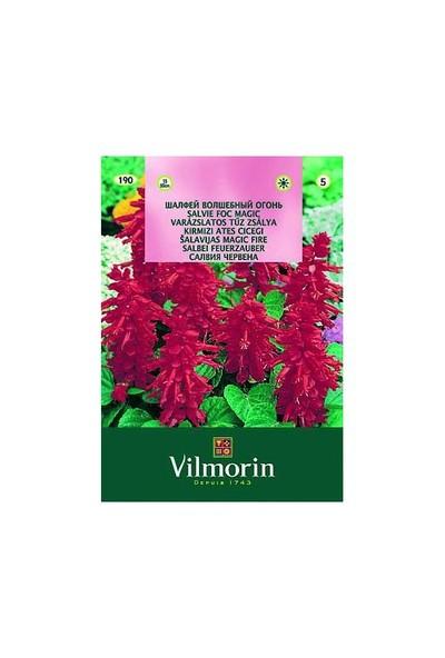 Vilmorin Ateş Çiçeği Çiçek Tohumu
