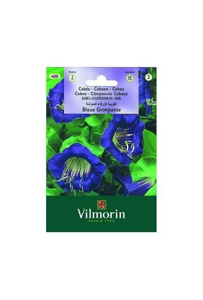 Vilmorin Çan Sarmaşığı Çiçek Tohumu