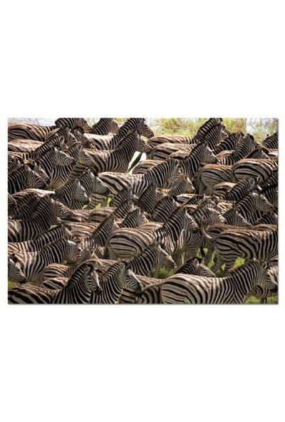 Educa Puzzle Herd Of Zebras (500 Parça)