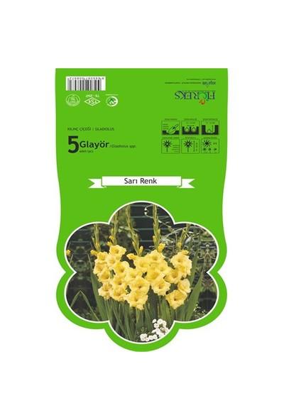 Plantistanbul Glayör Sarı Renk Paketli