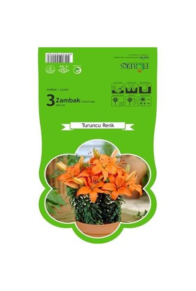 Plantistanbul Turuncu Zambak Soğanı