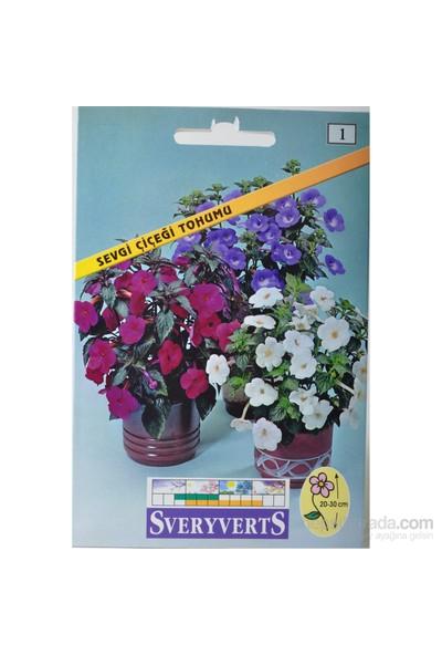 Sveryverts Sevgi Çiçeği Tohumu