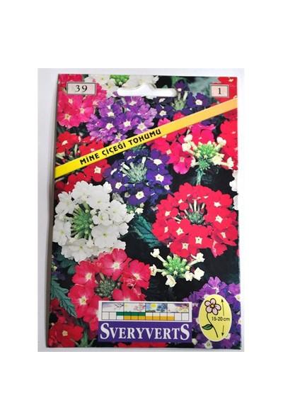 Sveryverts Mine Çiçeği Tohumu