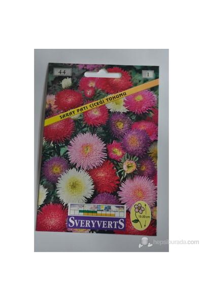 Saraypatı Çiçeği Tohumu 44