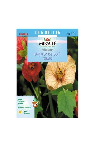 Miracle Tohum Karışık Renkli Çin Çan Çiçeği Tohumu (50 Tohum)