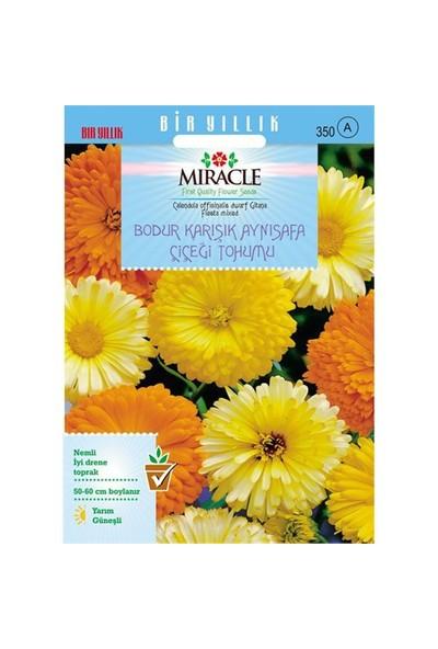 Miracle Tohum Karışık Renkli Bodur Aynısafa Çiçeği Tohumu (Gitana Mixed) (150 Tohum)
