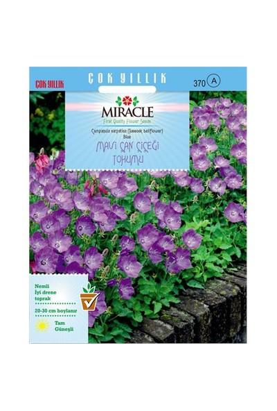 Miracle Tohum Blue King Mavi Çan Çiçeği Tohumu(1000 Tohum)