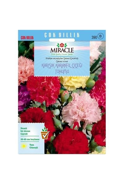 Miracle Tohum Chabaud Mixed Karışık Renkli Karanfil Çiçeği Tohumu (190 Tohum)
