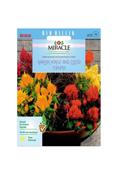 Miracle Tohum Karışık Renkli Horoz İbiği Çiçeği Tohumu (800 Tohum)