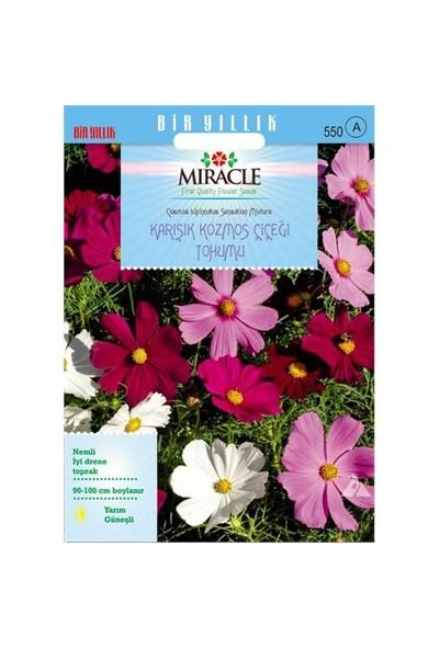 Miracle Tohum Karışık Renkli Cosmos (Kozmos) Çiçeği (290 Tohum)