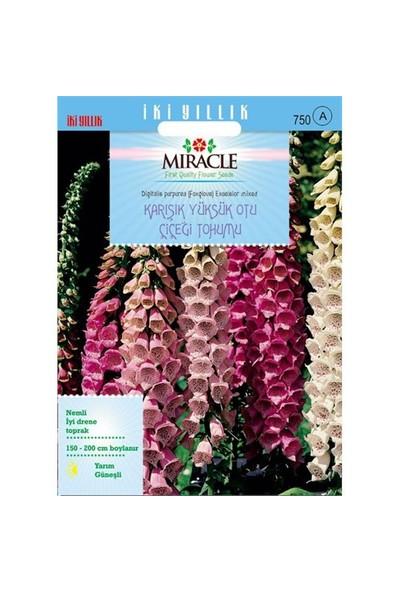 Miracle Tohum Excelsior Mixed Karışık Renkli Yüksükotu Çiçeği Tohumu (700 Tohum)