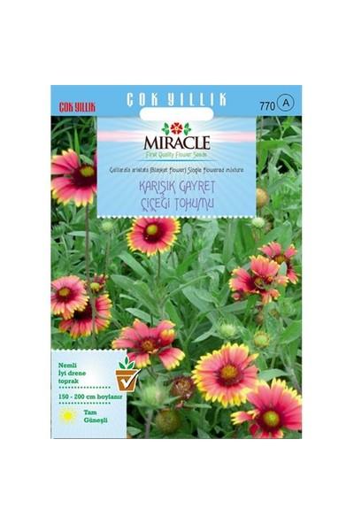Miracle Tohum Karışık Gayret Çiçeği (Giallardia Mix) Tohumu (190 Tohum)