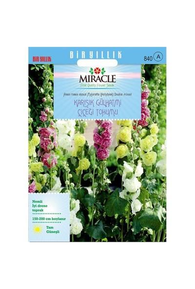 Miracle Tohum Karışık Renkli Katmerli Gül Hatmi Çiçeği Tohumu (40 Tohum)