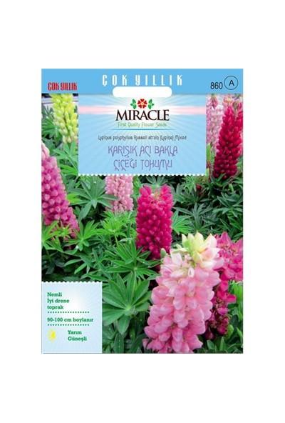 Miracle Tohum Russell Strain Karışık Renkli Acı Bakla Çiçeği Tohumu (42 Tohum)
