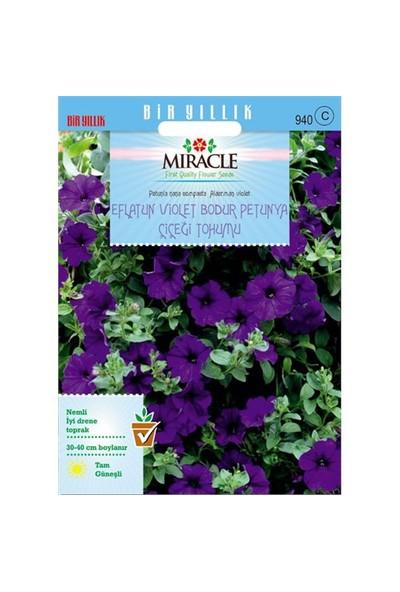 Miracle Tohum Eflatun Alderman Violet Bodur Petunya Çiçeği Tohumu (800 Tohum)