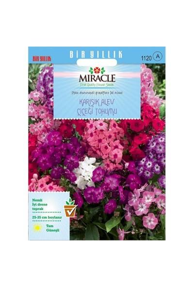 Miracle Tohum Karışık Renkli Alev Çiçeği Tohumu(340 Tohum)
