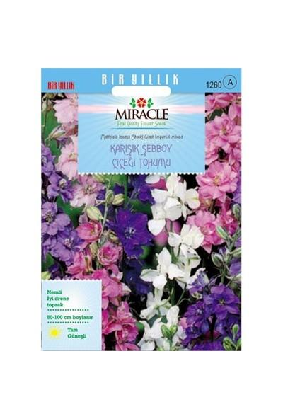 Miracle Tohum Karışık Renkli İmperial Giant Şebboy Çiçeği Tohumu (360 Tohum)
