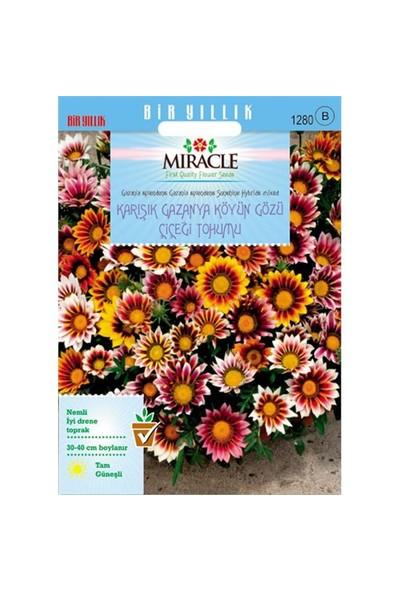 Miracle Tohum Karışık Renkli Koyun Gözü Gazanya Çiçeği Tohumu(70 Tohum)