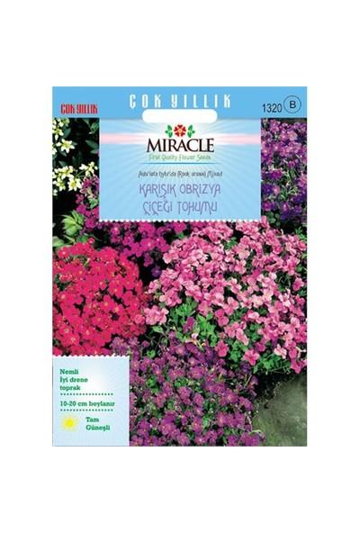 Miracle Tohum Rock Cress Aubrieta Karışık Renkli Obrizya Çiçeği Tohumu (400 Tohum)
