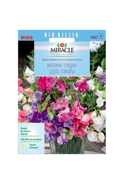 Miracle Tohum Karışık Renkli Nazende Itırşahi Çiçeği Tohumu (24 Tohum)