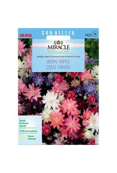 Miracle Tohum Karışık Renkli Katmerli Haseki Küpesi Çiçeği Tohumu(400 Tohum)