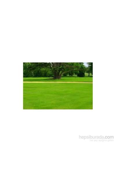 Plantistanbul Lolium Perenne Ovatıon İngiliz Çimi 1Kg