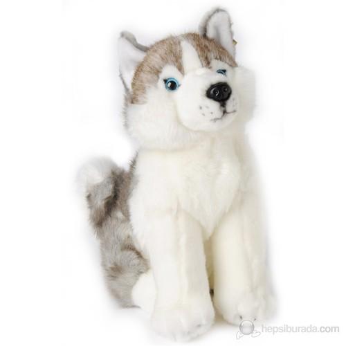 İndo-Pals Gri Husky Köpek