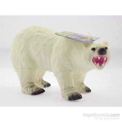 Kutup Hayvanlari Kutup Ayisi
