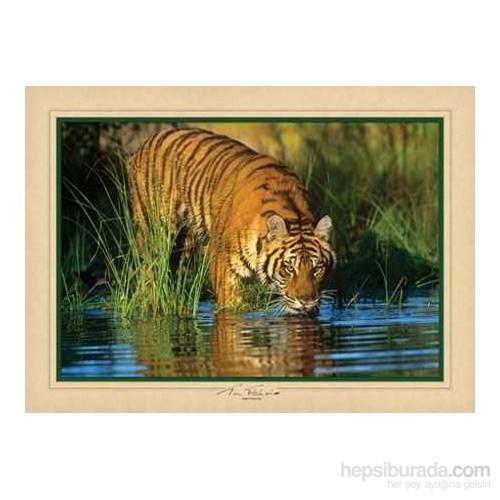 Tigers Time Out (1000 Parça)