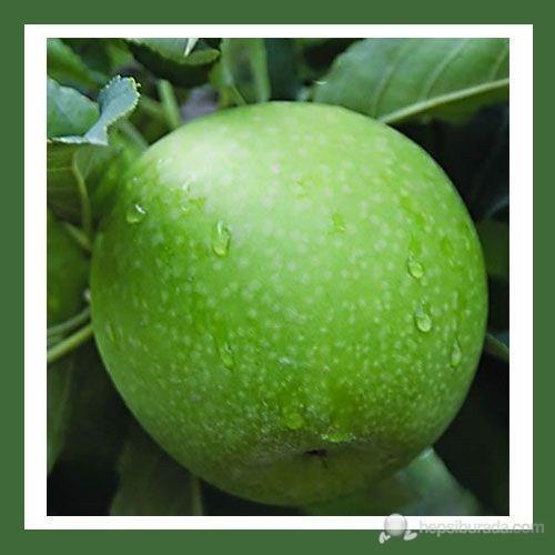Plantistanbul Elma Fidanı, Granny Smith Aşılı, Açık Kök, +120Cm