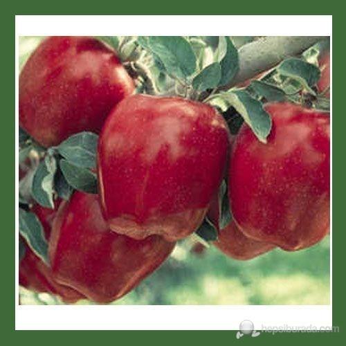 Plantistanbul Yarı Bodur Elma Fidanı, Starkrimson Aşılı, Açık Kök, +120Cm