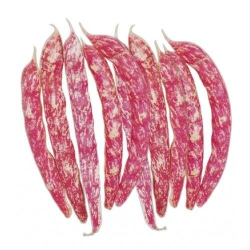 Plantistanbul Fasulye Süper Oturak Barbunya Tohumu Paket 25 Gr.