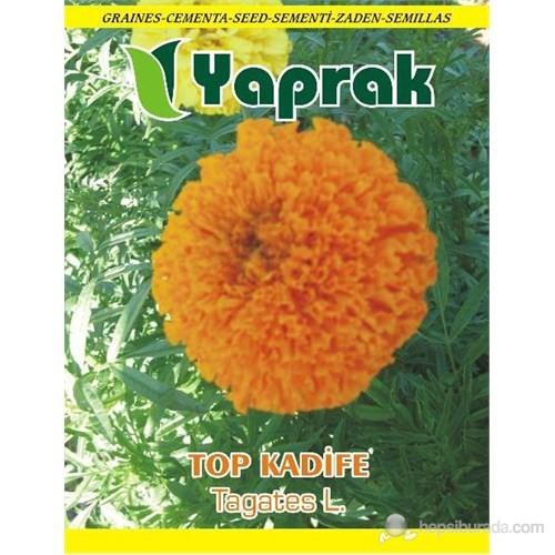 Yaprak Çiçek Tohumu Top Kadife