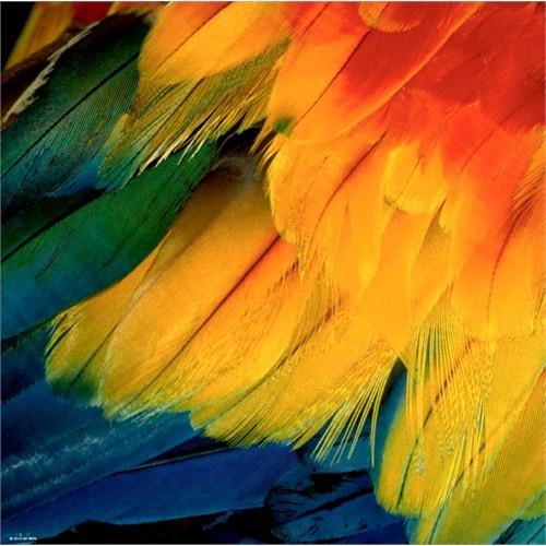 Heye Puzzle Feathers, Art Wolfe (1000 Parça)