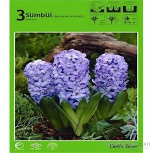 Delft Blue Sümbül Soğanı Paketli