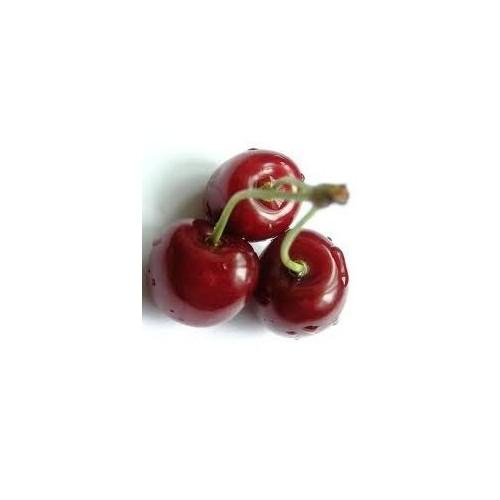 Plantistanbul Kiraz Fidanı, Noble Aşılı, Tüplü, +100Cm