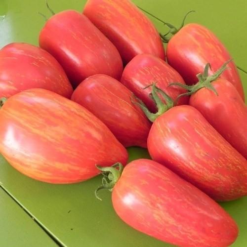 Tohhum Kırmızı Mum Domatesi * 25+ Tohum [Tohhum Ev Bahçe]