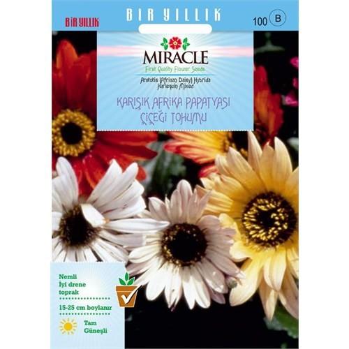 Miracle Tohum Karışık Renkli Afrika Papatyası Çiçeği Tohumu (30 Tohum)